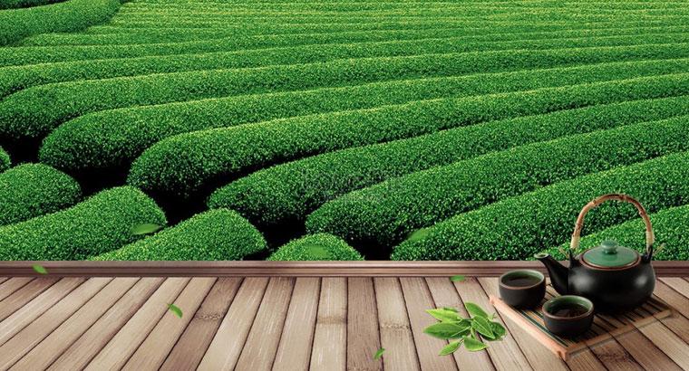 فروش چای بهاره ارگانیک