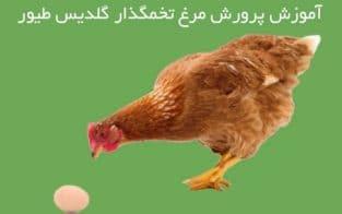 آموزشگاه پرورش مرغ صنعتی و تخم گذار