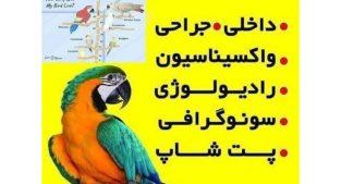 کلینیک پرندگان در قم