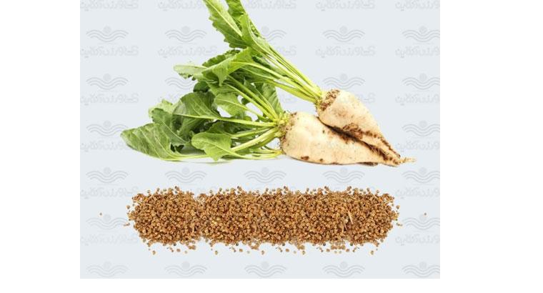 فروش بذر چغندر قند در نهاوند