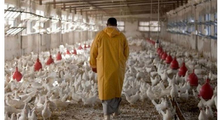 فروش تجهیزات مرغداری در گرگان