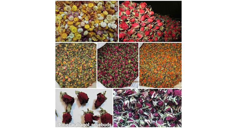 فروش غنچه گل رز