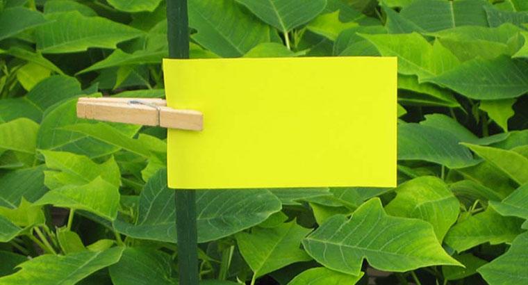 چسب کارت زرد حشرات