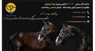 صدور تخصصی بیمه اسب