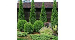 خدمات و طراحی باغ و باغچه